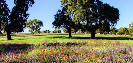 La conservación y el patrimonio de la dehesa centrarán la XXIV edición de las Jornadas Técnicas de Covap