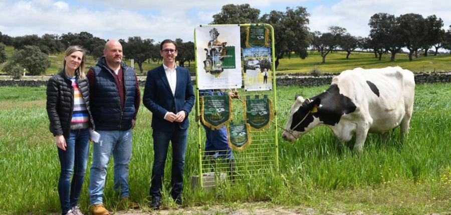 El I Concurso Morfológico Regional de Andalucía de Raza Frisona se estrena con 15 ganaderías