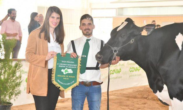 Araceli Cabello, delegada de agricultura de la Junta de Andalucía por Córdoba, presente en II Concurso de ganado frisón