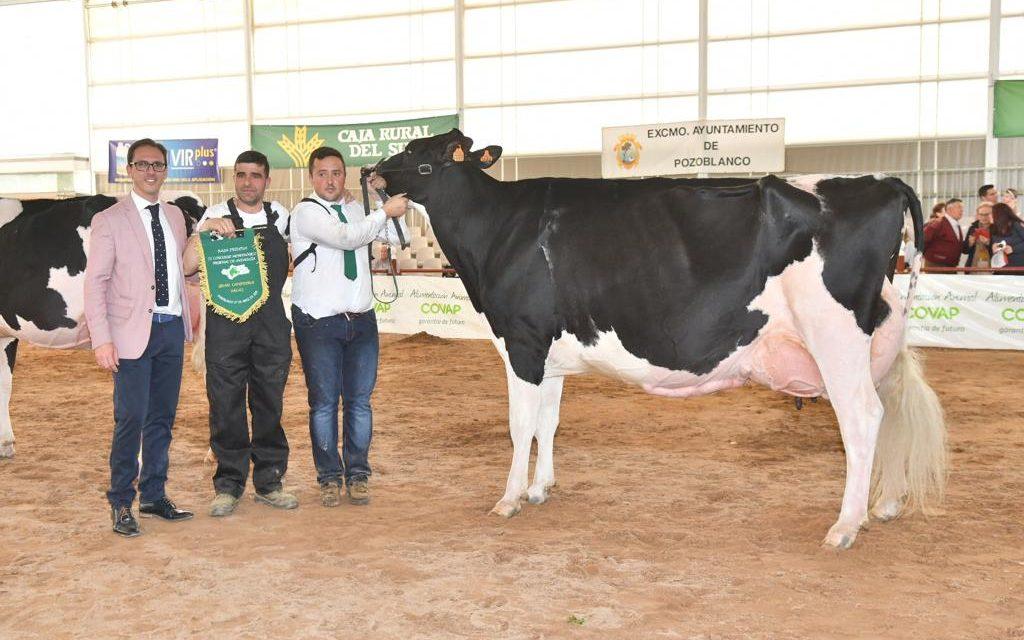La vaca 'Copada Fever V', de la la ganadería Loma La Copada, se alza como Gran Campeona del II Concurso Morfológico Regional de la Raza Frisona