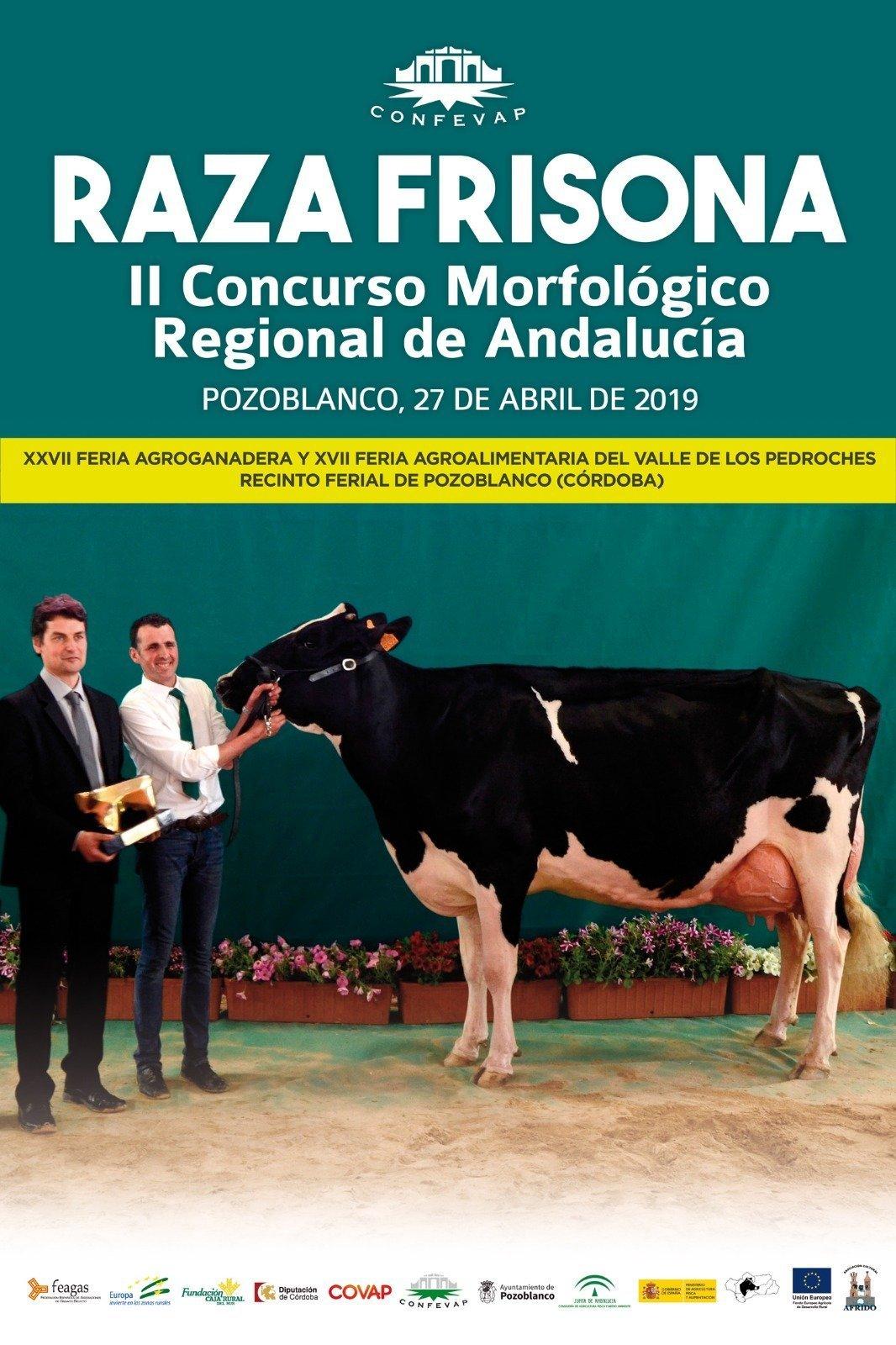 II Concurso Morfológico Regional de Andalucia Raza Frisona Pozoblanco